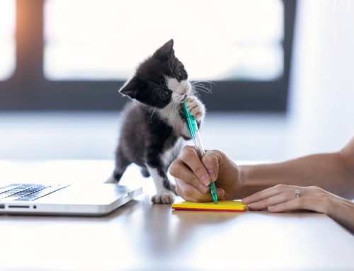 Veterinary Content Writing—Combining Research, Creativity, and a Love of Pets